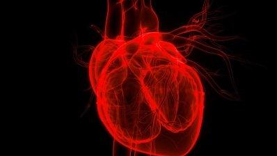 Зі смертельної отрути павуків створять препарат від інфаркту