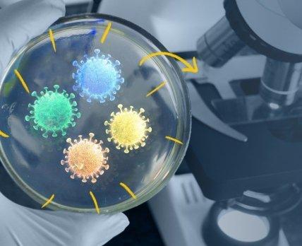 Азбука ковида: почему опасные штаммы коронавируса получили новые имена?