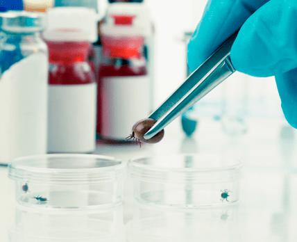 Болезнь Лайма: опасности боррелиоза, о которых не догадываются посетители аптек