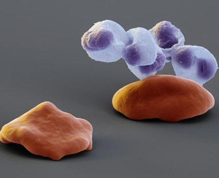 Moderna візьметься за виробництво антитіл