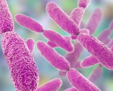 Пробиотик победил клостридиоз