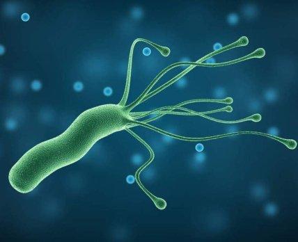 Учёные считают, что для борьбы с хеликобактерной инфекцией можно использовать аналог холестерина