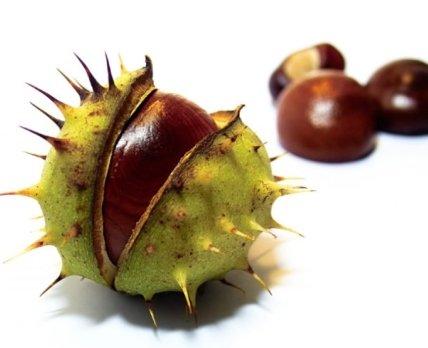 Сдать каштаны: где покупают эти плоды и какие лекарства из них изготавливают